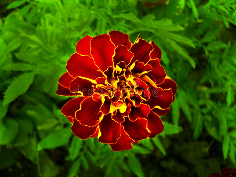 Bright flower. Beautiful Flower with vivid colors royalty free stock photo