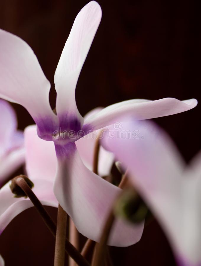 Bright flower on black background. royalty free stock photos