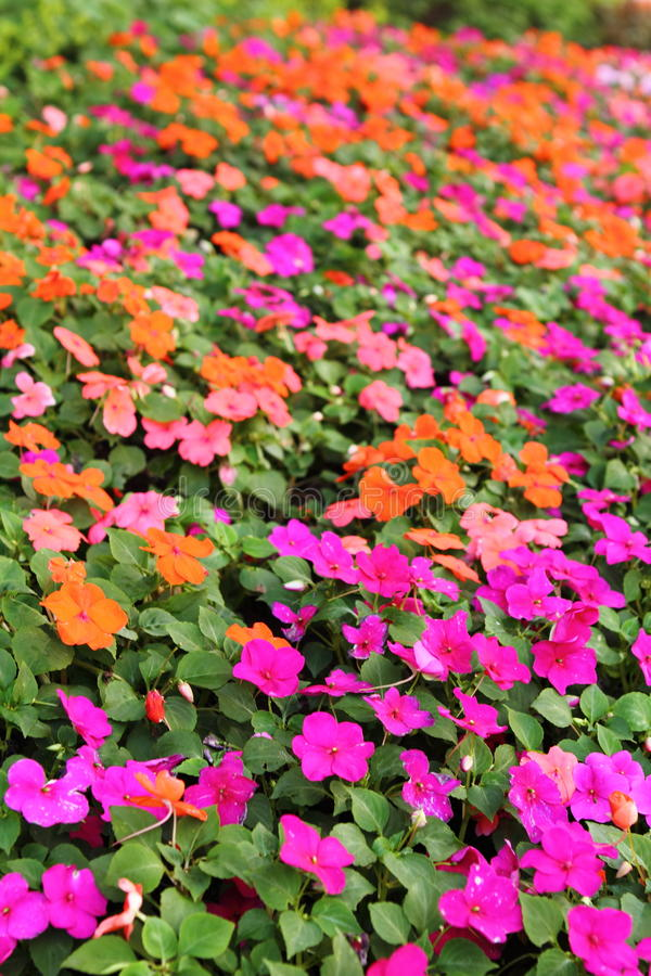Bright flowers royalty free stock images