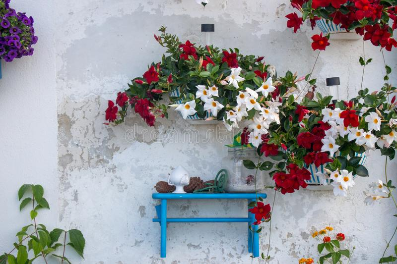 Bright flowers against white textured wall. Rustic backyard exterior. Italian village outdoor decoration. White and red flowers in pots on wall. Garden design royalty free stock photography