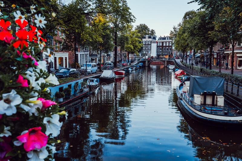 Bright flowers on a bridge over a beautiful tree-lined canal in the centre of Amsterdam, Netherlands royalty free stock image
