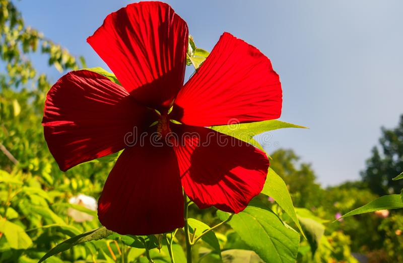 Bright flowers on a flowerbed against a blue sky. Flowers on a flowerbed against a blue sky in the garden stock images