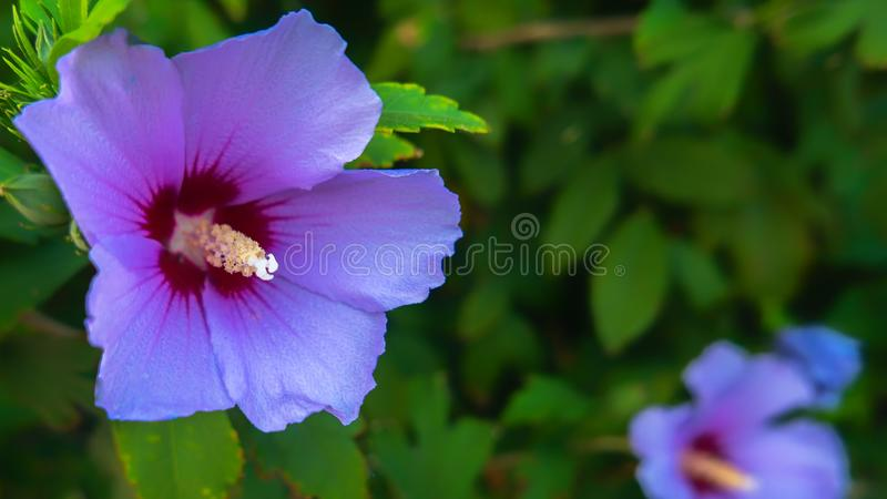 Bright flowers on a flowerbed against a blue sky. Flowers on a flowerbed against a blue sky in the garden royalty free stock photo