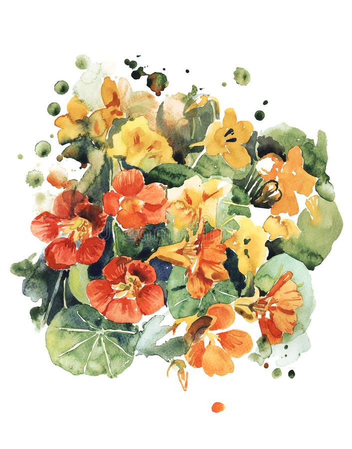 Bright flowers of garden nasturtium in orange tones vector illustration