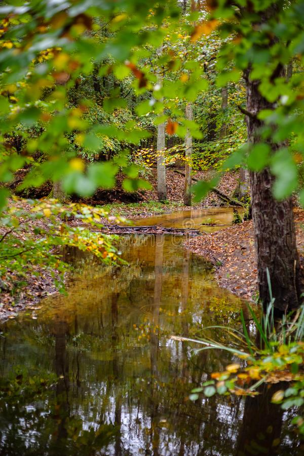Bright forest river at fall. The leuvenumse creek is one of the few natural streams in Dutch nature. This brook is the longest of the Veluwe and is a beautiful stock photos