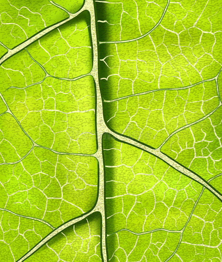 Bright Fresh Green Leaf Vector Background Royalty Free Stock Photography