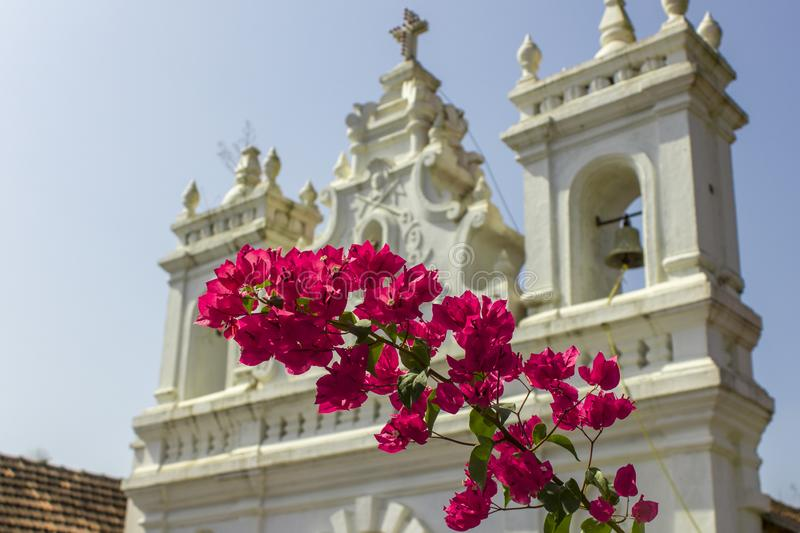 Bright fresh green leaves and pink tropical flowers on a branch against a blurred background of a white Catholic church under a. A bright fresh green leaves and stock photo