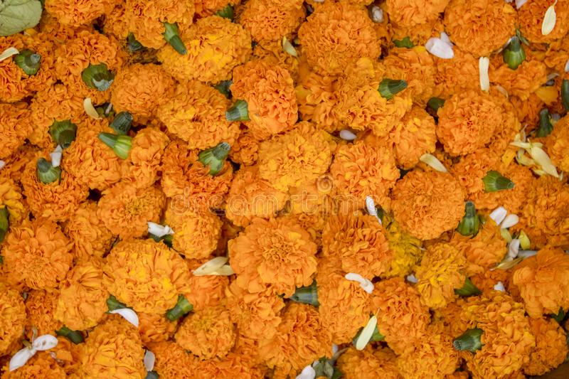 Bright fresh orange flowers Marigold in a pile close-up. natural surface texture stock photo