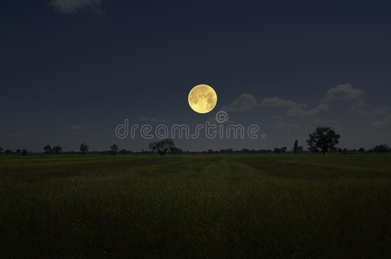 Bright full moon in blue sky over gold field stock photography