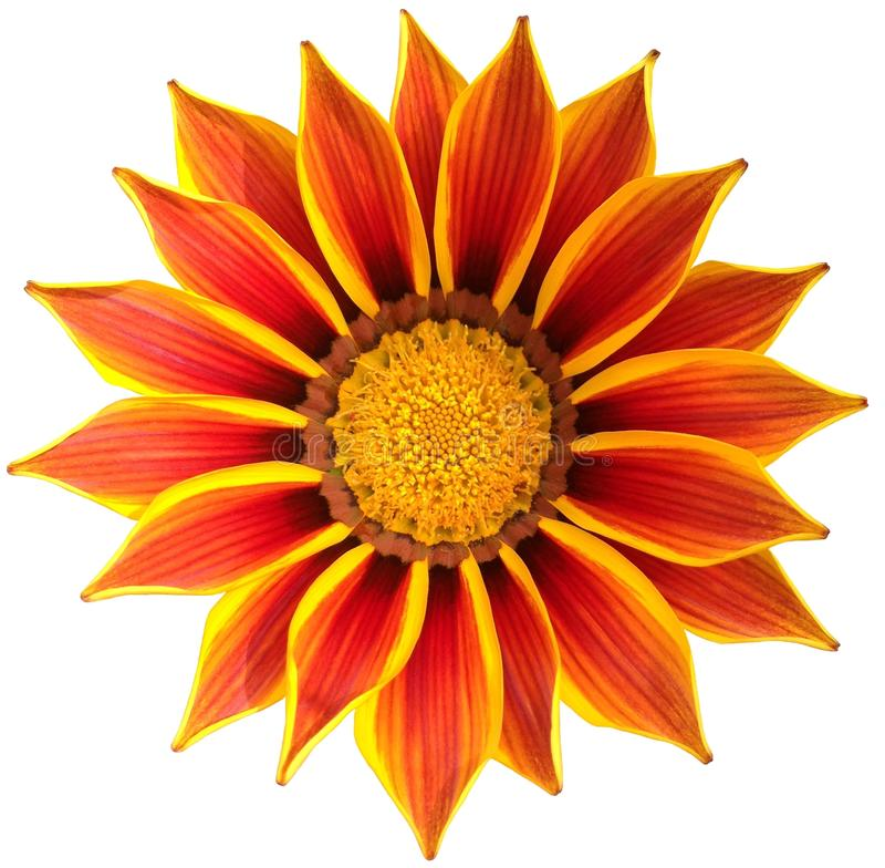 A bright gazania flower with orange and yellow petals stock photo