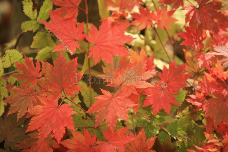 Bright gold autumn