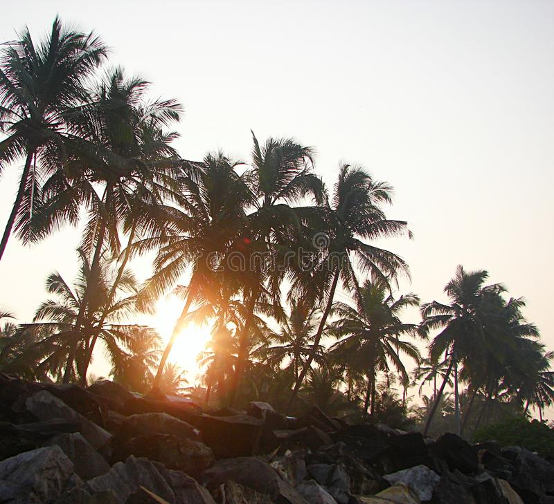 Bright Golden Sunlight coming through Row of Palm Trees - Payyambalam Beach, Kannur, Kerala, India. This is a photograph of rising sun with its sunlight coming stock photography