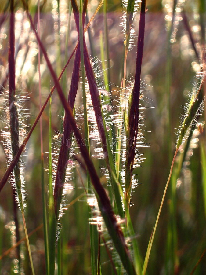 Free Bright Grass Blades Stock Image - 1405941