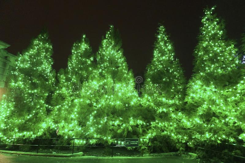 Bright Green Christmas Trees at Night stock photography
