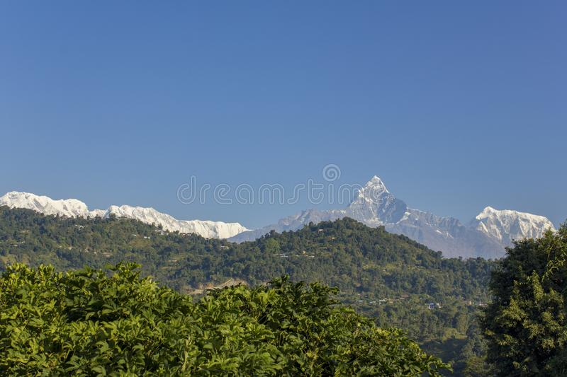 Bright green foliage against the background of wooded hills and the snow ridge of the Annapurna Mountains under a clear blue sky. A bright green foliage against stock photos