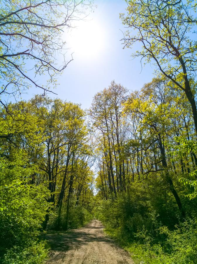 Bright green forest full of life under the spring warm sunlight. Tranquil background of spring nature, beautiful landscape of a stock photo