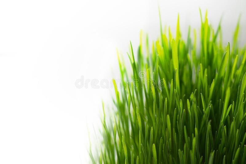 Bright Green Fresh Grass Isolated on White Background royalty free stock photography