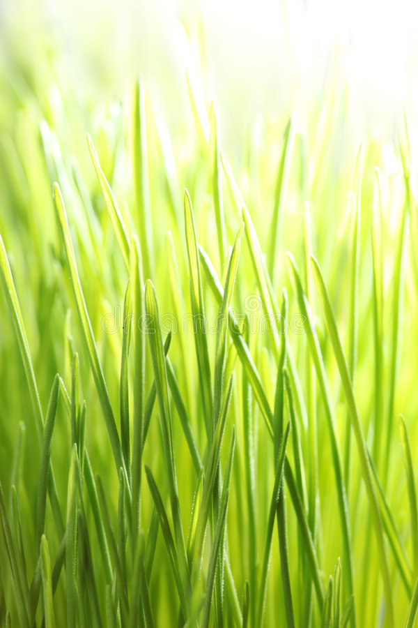 Bright green grass stock photo