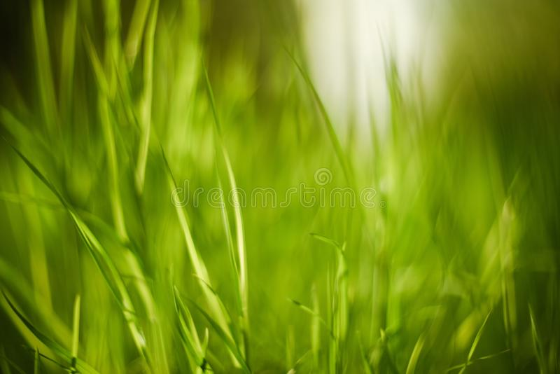 Bright green grass blurred close up. Natural background texture stock images
