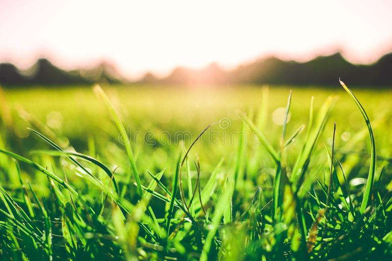 Bright green grass close-up with sunlight reflecting on a blurred background of hills royalty free stock photo