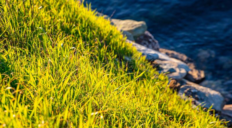 Bright green grass closeup view, rocky beach and blue sea water background royalty free stock photos