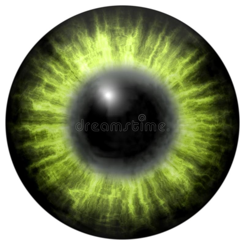 Bright green human eye with middle pupil and dark retina. Dark colorful iris around pupil, detail view into eye bulb. Light green eye with middle pupil and dark vector illustration
