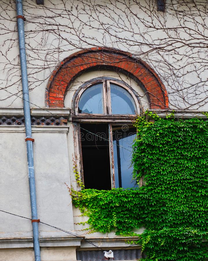 Green Ivy Growing on Old Stone Bucharest House, Romania. Bright green ivy growing on the fron facade of an old pale coloured stucco suburban Bucharest house royalty free stock image