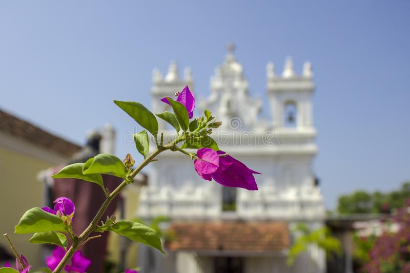 Bright green leaves and fresh pink tropical flowers on a branch against a blurred background of a white Catholic church under a. A bright green leaves and fresh royalty free stock photos