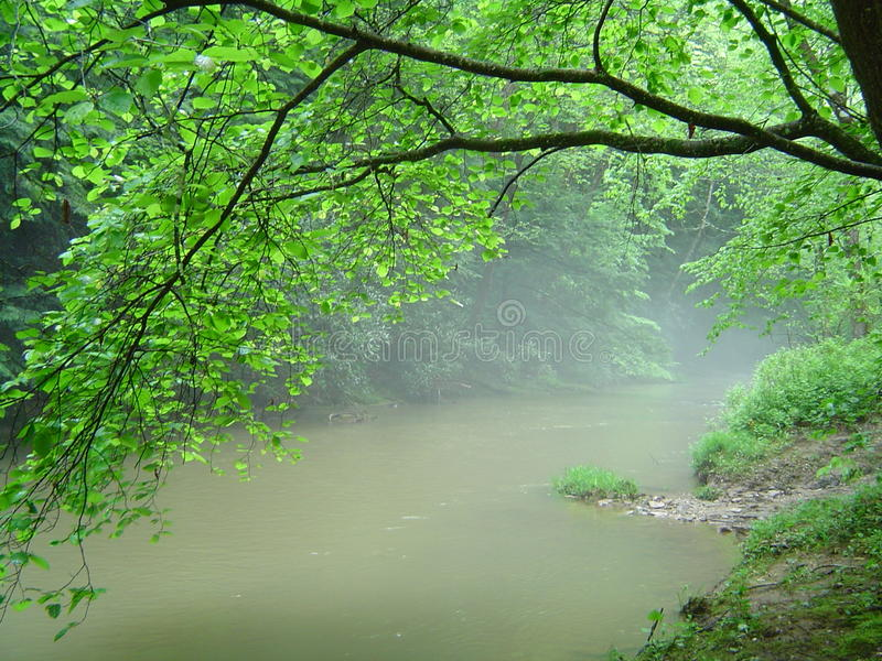 Bright green leaves hanging over misty river royalty free stock photo