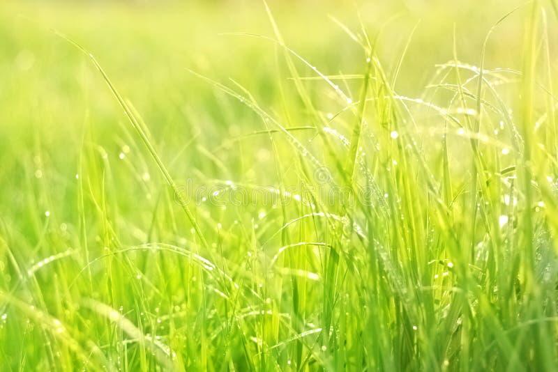 Bright Green Lush Grass Stock Photos
