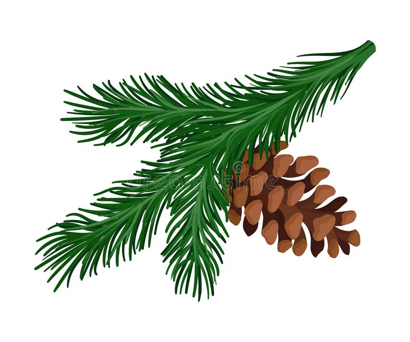 Bright green spruce branch with a pine cone. Vector illustration. Bright green lush spruce branch with a brown cone. Vector illustration stock illustration