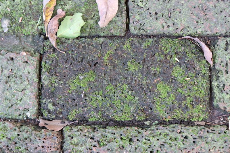 Bright Green moss on a gray brick wall stock photography