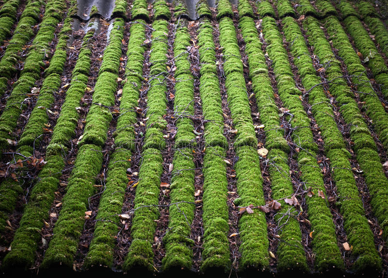 Bright green of mossy roof. Bright green of mossy tiled roofing slate roof top background texture stock images