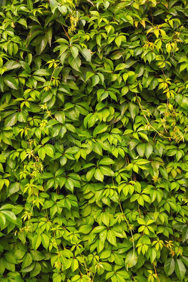 Bright green natural vertical background stock image
