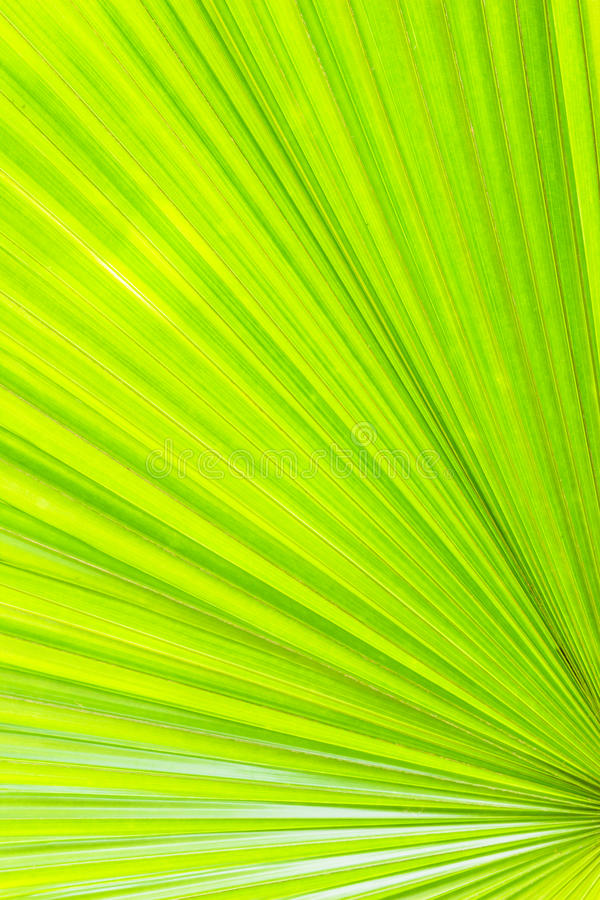 Free Bright Green Palm Leaf Background Royalty Free Stock Image - 28181066