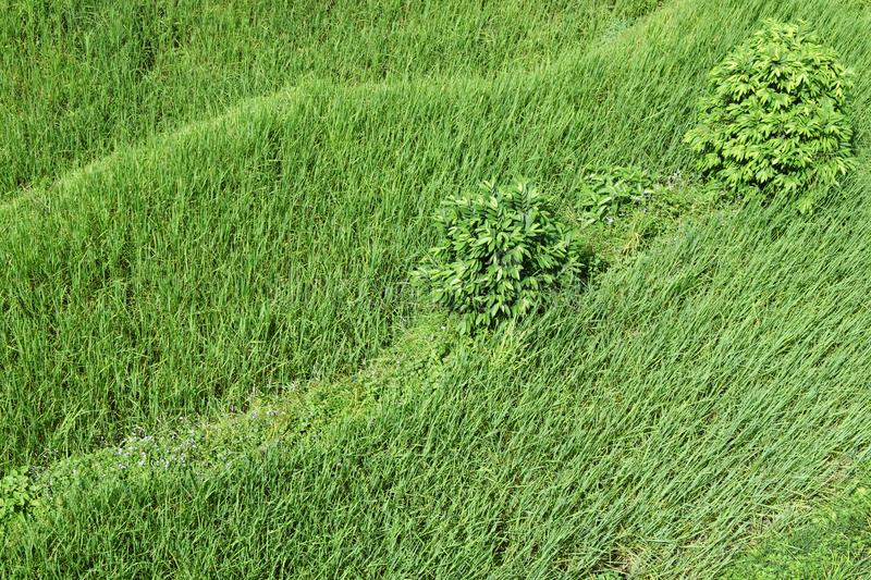 Bright Green Wavy Grass And Shrubs Stock Photo Image Of Bushes