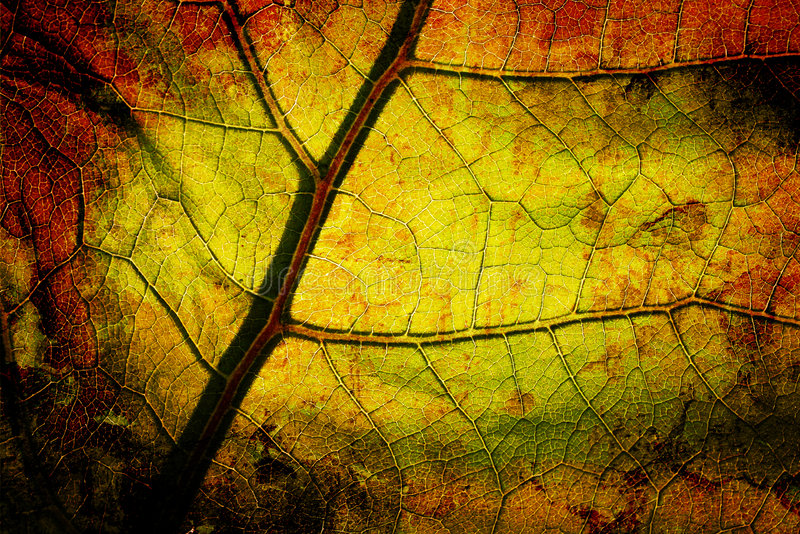 Bright grunge leaf. Bright grunge wooden mix with leafs royalty free stock photography