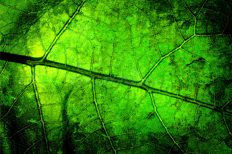 Bright grunge leaf. Bright grunge wooden mix with leafs royalty free stock image