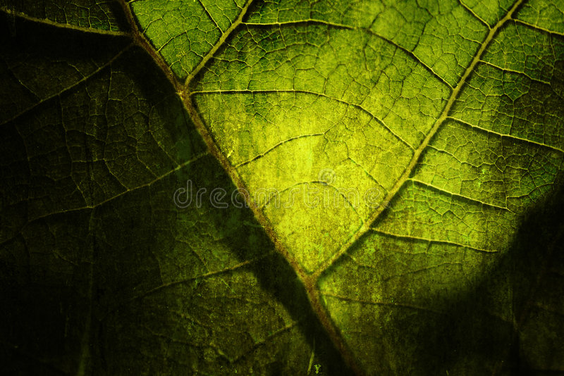 Bright grunge leaf royalty free stock images