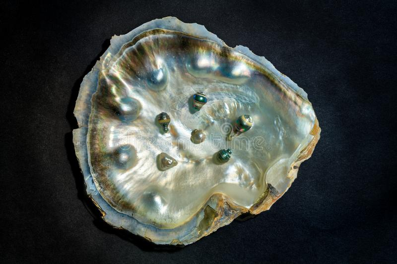 An oyster shell with black pearls stock photography