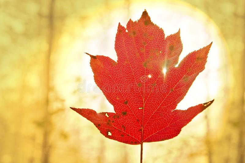 Bright leaf forest royalty free stock photo