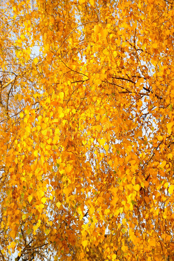 Bright Leaves On A Tree Stock Images