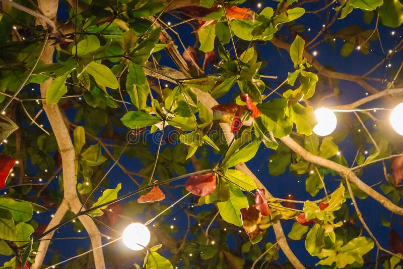 Bright light garland on tree branch at night. Light bulbs in green foliage on night sky background. Outdoor party decoration in the evening. Summer garden stock images