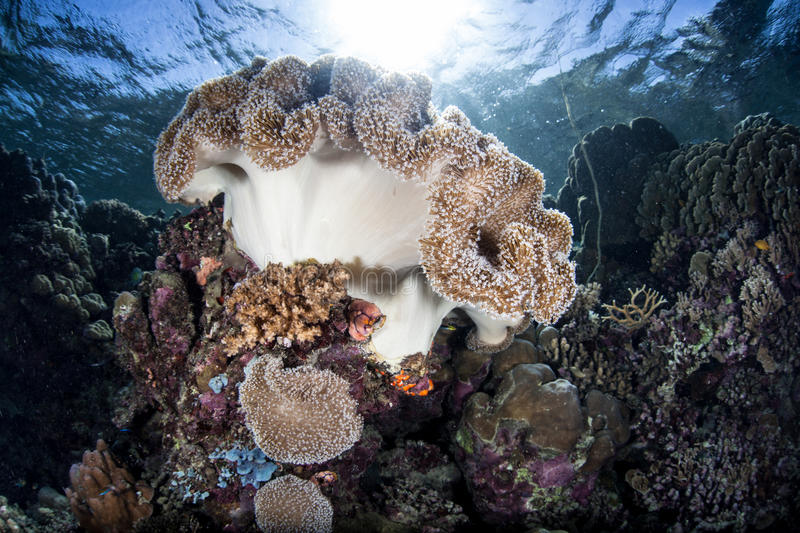 Bright Light and Submerged Cavern. Beams of brilliant sunlight descends into a dark hole in a coral reef in the Solomon Islands. Dark habitats provide niches for stock photos