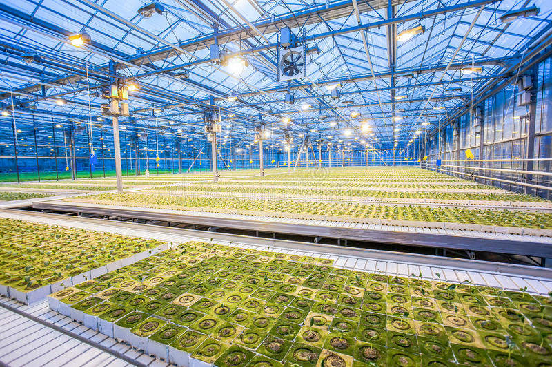 Bright lights at the greenhouse. Huge hydroponic plantation system with powerful lamps royalty free stock photos