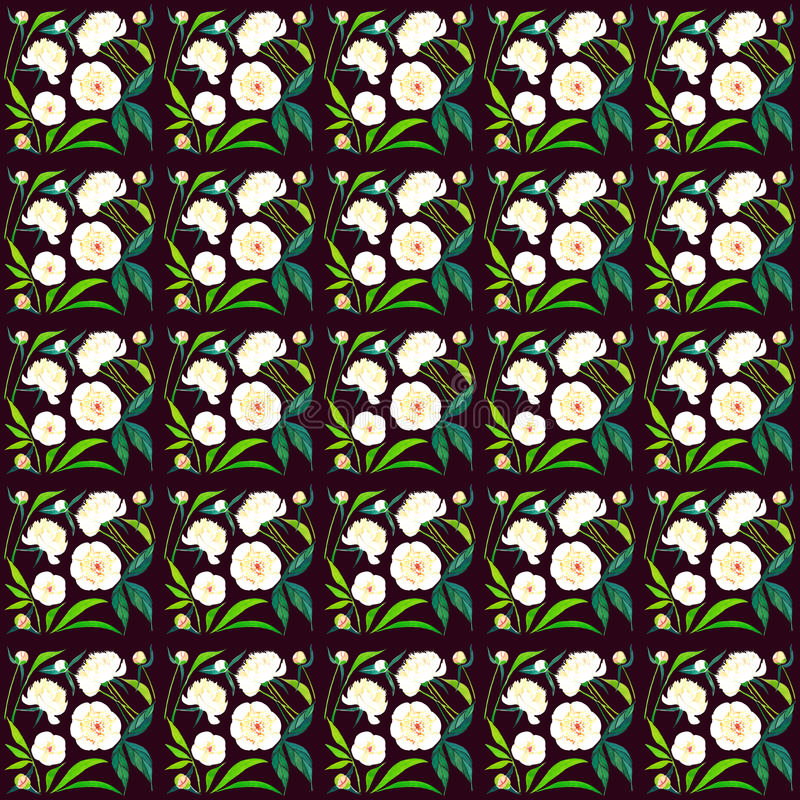 Bright lovely graphic colorful spring tender white peonies with buds and green leaves pattern on dark brown background watercolor stock illustration