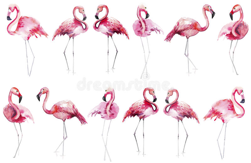 Bright lovely tender gentle sophisticated wonderful tropical hawaii animal wild summer beach pink flamingos pattern watercolor han. D sketch. Perfect for royalty free illustration