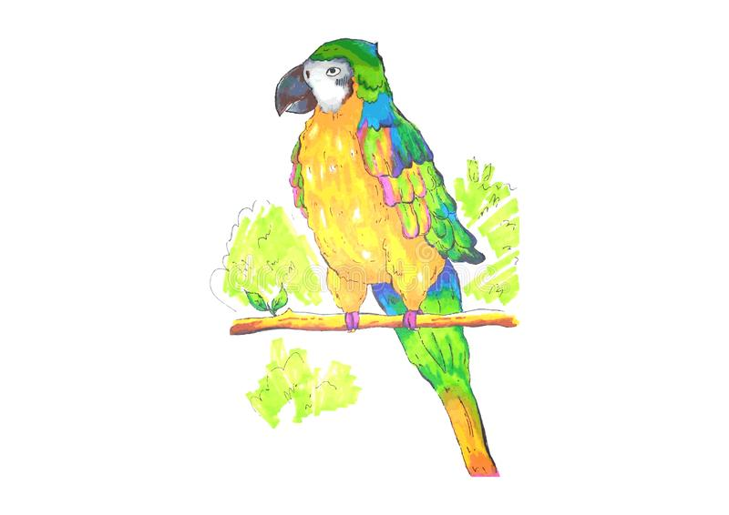 Bright macaw parrot on a branch stock photography