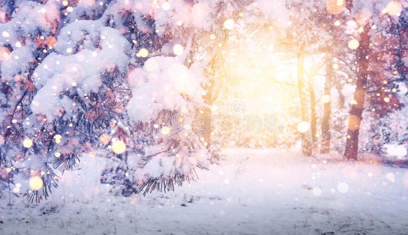 Bright magic glow in Christmas forest. Winter background. Glowing snowflakes fall on snowy trees and snow. stock image