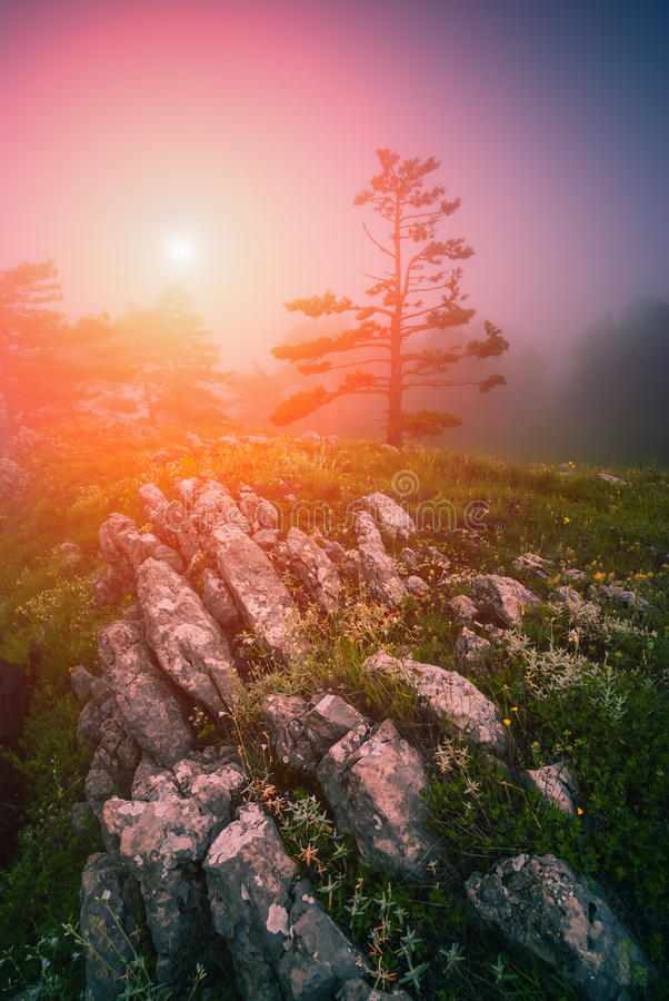 Bright misty morning stock images